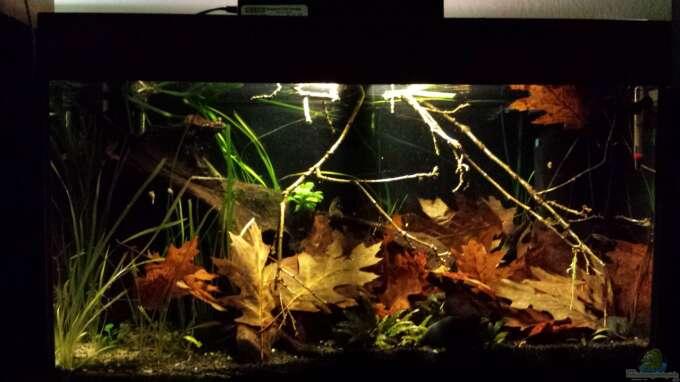 Aquarium Hauptansicht von Kleine Amerika Räuberwelt