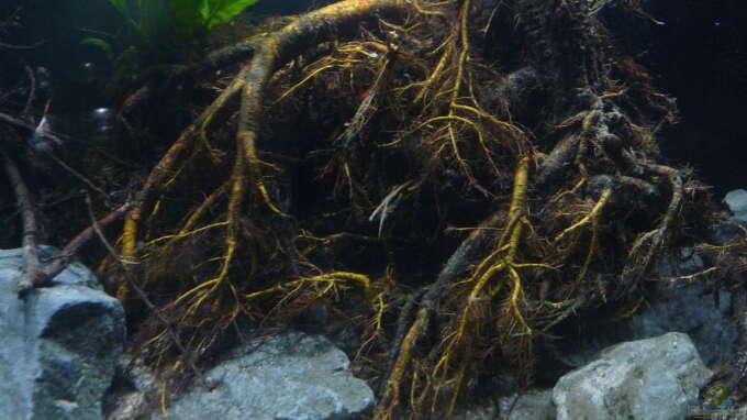 Aquarium Hauptansicht von Irgendwo in Asien