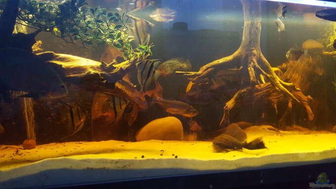 Aquarium Hauptansicht von Südamerikanische Flusslandschaft