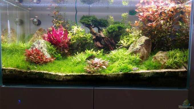 Stand 17.03.16 ein paar Probleme mit Algen bestehen noch, aber ansonsten wächst und gedeiht es