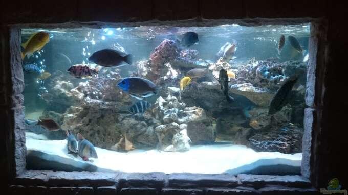 Aquarium Hauptansicht von Fischsuppe