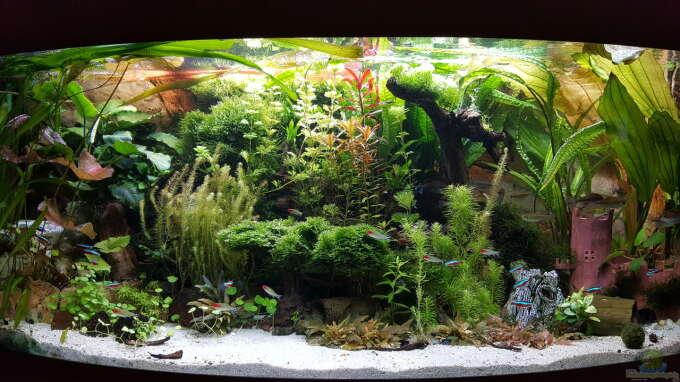 Aquarium Hauptansicht von Juwel Vision 450 Gesellschaftsbecken