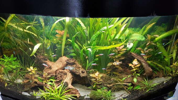 Aquarium Hauptansicht von Juwel Vision 180 Southamerica Fever