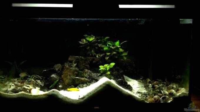 Aquarium Hauptansicht von Paul´s Tanganjika Aquarium
