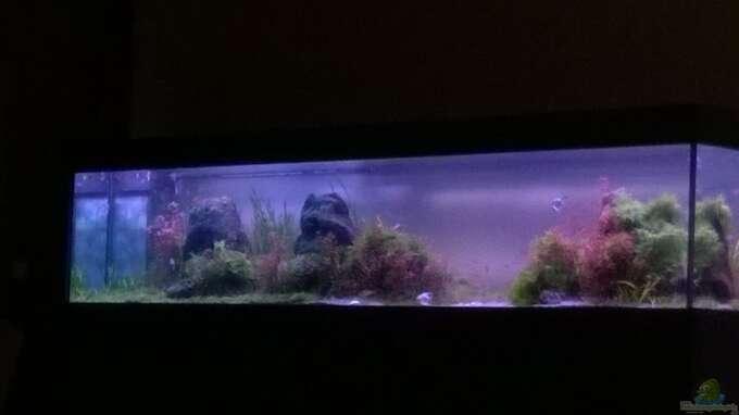 Aquarium Hauptansicht von Becken 32605