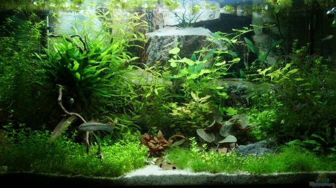 Aquarium Hauptansicht von Eheim Vivaline 126