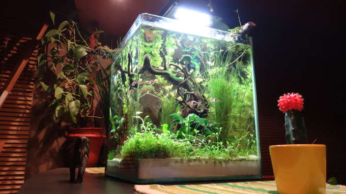 Aquarium Hauptansicht von Miniunterwasserwelt