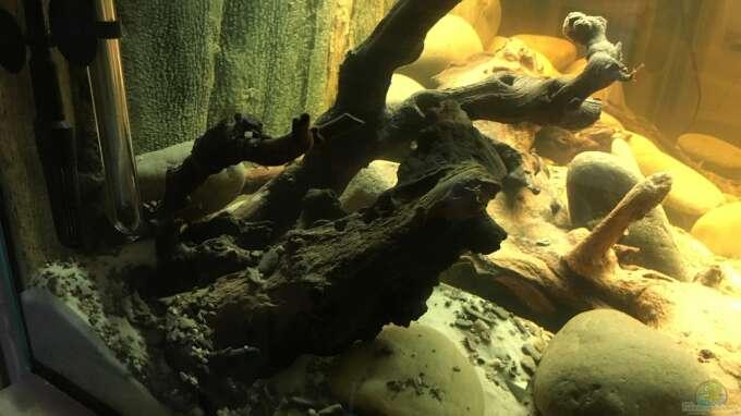 aquarium rio xingu l welse artenbecken einlaufphase aus rio xingu l welse artenbecken. Black Bedroom Furniture Sets. Home Design Ideas