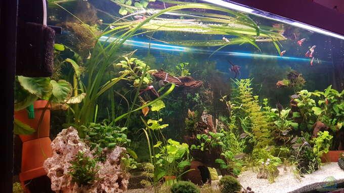 pflanzen im aquarium 450 liter aus 450 liter von aquarius1988. Black Bedroom Furniture Sets. Home Design Ideas