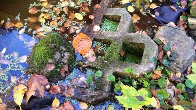 Herbst mit moos bewachsene steine am teich rand aus for Steine teich