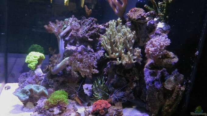 Aquarium 80l Nano Riff Aus 80l Nano Riff Von Wolfgang Hutter