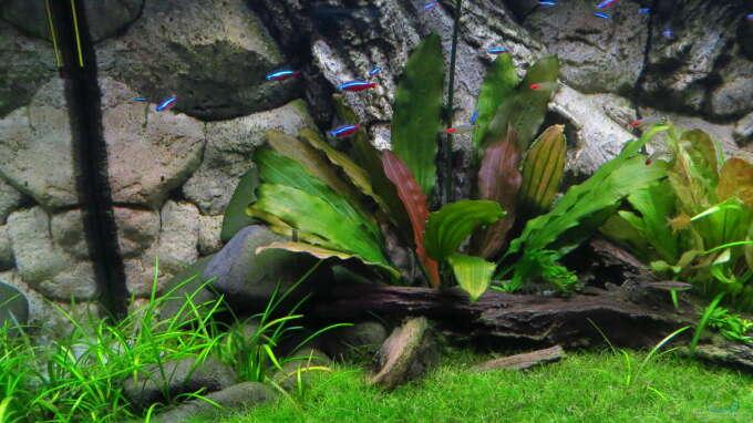 Aquarium amazonien aus amazonien von jan s for Zierfische hannover