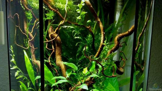 aquarium von kuller 34446 6 eck westafrikabecken. Black Bedroom Furniture Sets. Home Design Ideas