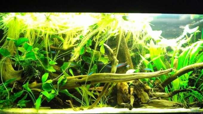 Aquarium von garvin borschewski becken 3931 for Zierfische hannover