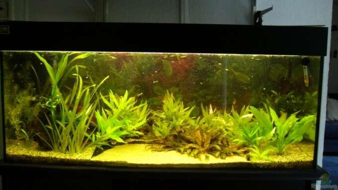 aquarium hauptansicht von becken 3961 aus becken 3961 von verena georges. Black Bedroom Furniture Sets. Home Design Ideas