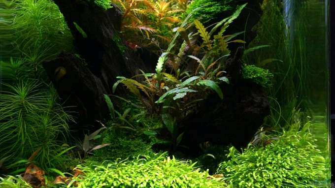 The Art of the Planted Aquarium 1.Platz 2012
