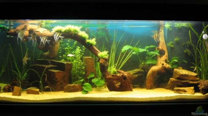 aquarium von christian messner becken 5477. Black Bedroom Furniture Sets. Home Design Ideas