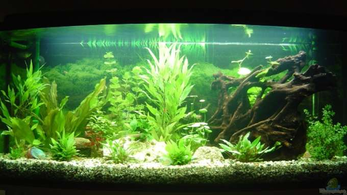 Aquarium von michel seifert becken 5754 for Aquarium 120x40x50