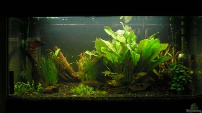 aquarium von mario lange becken 5997. Black Bedroom Furniture Sets. Home Design Ideas
