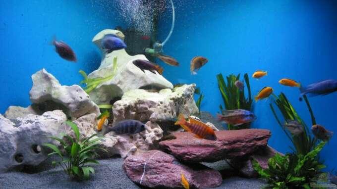 aquarium von jens schoch becken 61. Black Bedroom Furniture Sets. Home Design Ideas