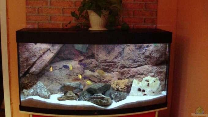 Seite von vladi aquarium einrichtungsbeispiele for Zierfische hannover