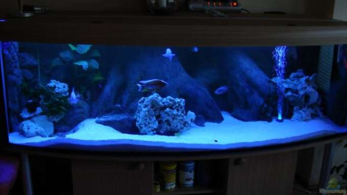 malawifrank 6567 aquarium 200 80 80 cm 12 mm glas. Black Bedroom Furniture Sets. Home Design Ideas