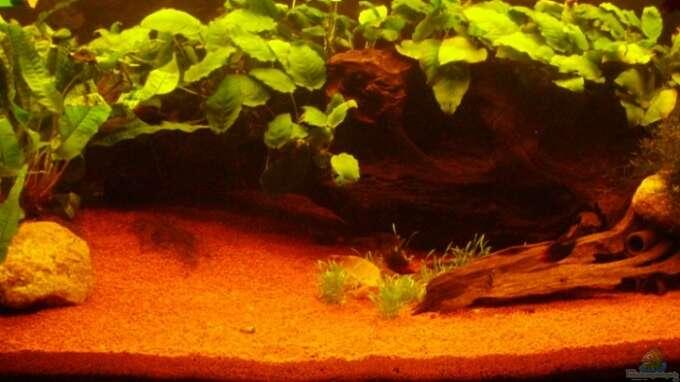 Aquarium von greedo 8427 160 liter becken for Zierfische hannover