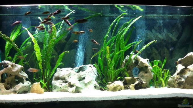 Aquarium Hauptansicht von White World
