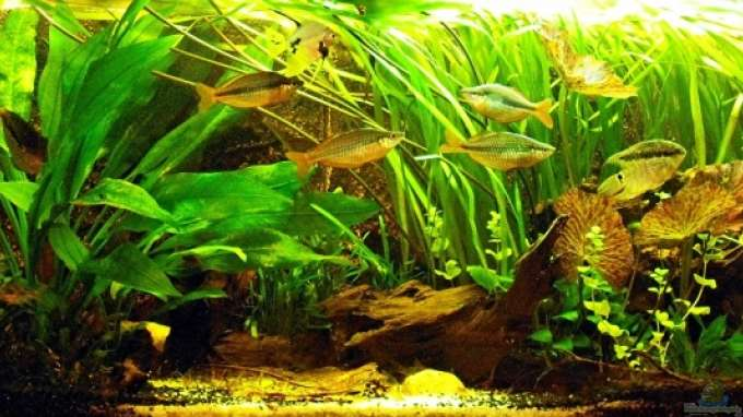 Aquarium von becke becken 9179 for Zierfische hannover
