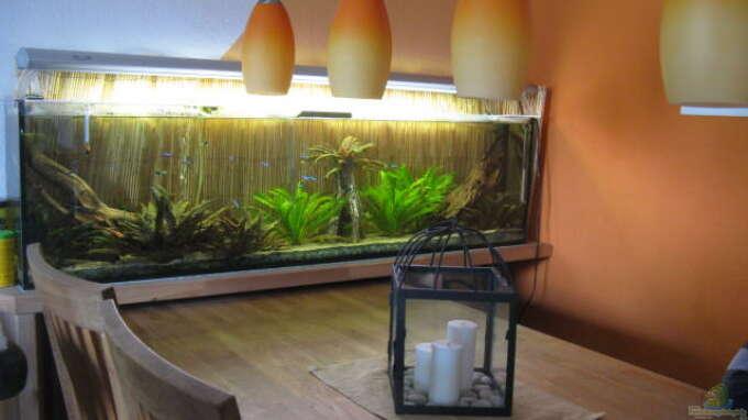 Aquarium Hauptansicht von Froschbecken
