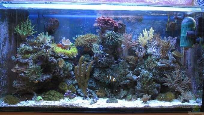 seite von andi76 aquarium einrichtungsbeispiele. Black Bedroom Furniture Sets. Home Design Ideas