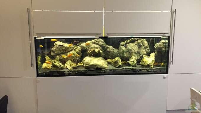 Aquarium Hauptansicht von Becken 9414