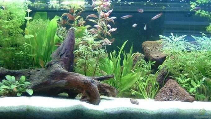 Aquarium von stefan brouwer becken 9833 for Zierfische hannover
