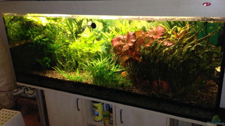 Beispiele Susswasseraquarium Einrichtungsbeispiele