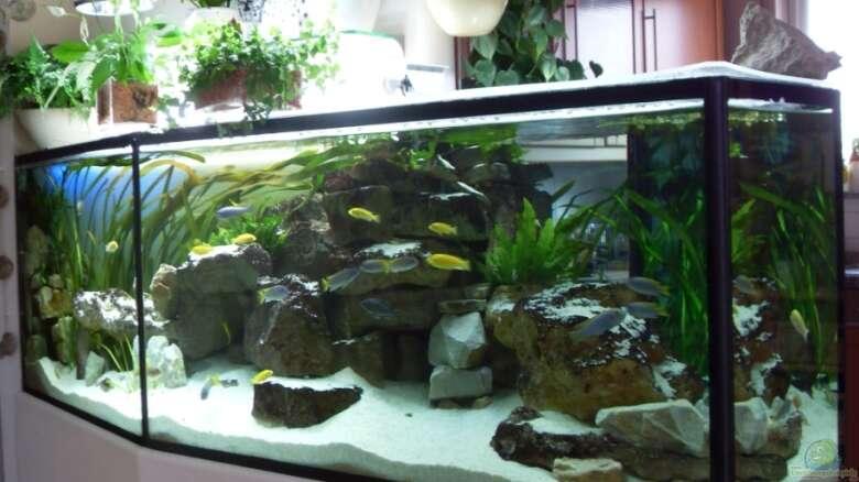 Aquarium Teich Terrarium Einrichtungsbeispiele