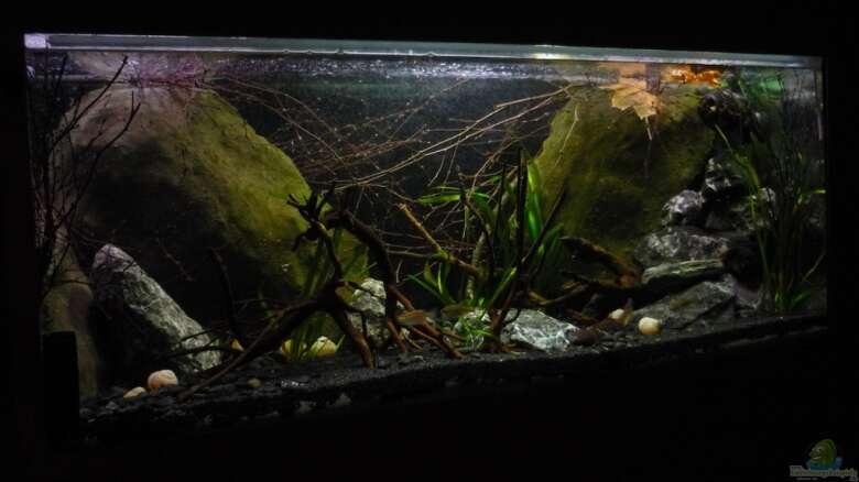 Aquarium Von Chris R 18466 Black Pearl