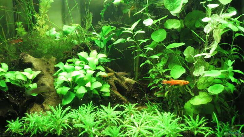 aquarien mit killifischen einrichtungsbeispiele. Black Bedroom Furniture Sets. Home Design Ideas