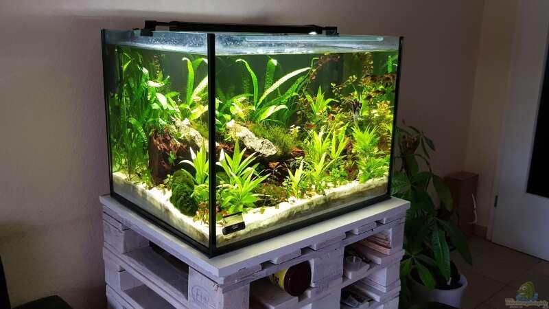 Ein Aquarium richtig einrichten