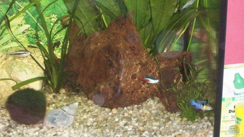 Dekotation im Aquarium Becken 10052