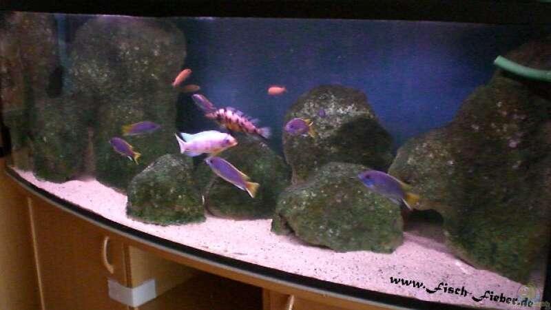 aquarium von dirk friebe becken 11803. Black Bedroom Furniture Sets. Home Design Ideas