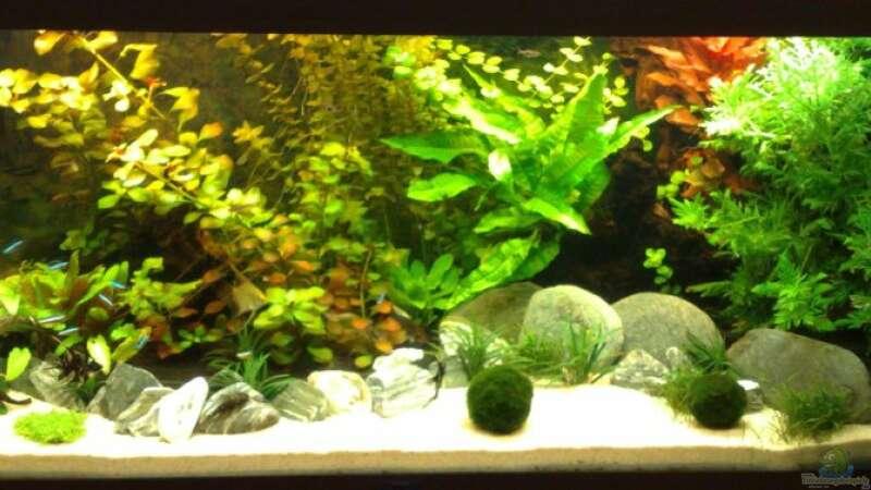 aquarium von stoffel 13623 rio 240. Black Bedroom Furniture Sets. Home Design Ideas