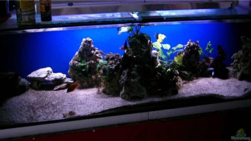 Aquarium von chrismalawifan (13984): nonmbuna becken