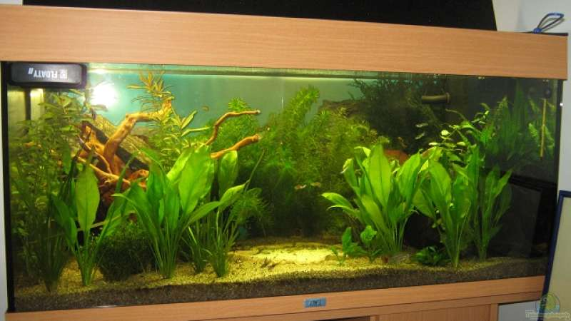aquarium von sven lowbob anf nger becken 19. Black Bedroom Furniture Sets. Home Design Ideas