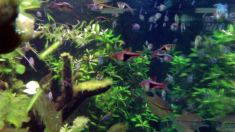 Aquarium Asian Dream