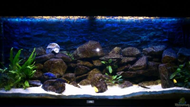 aquarium von stulli 22260 mein erstes malawibecken. Black Bedroom Furniture Sets. Home Design Ideas