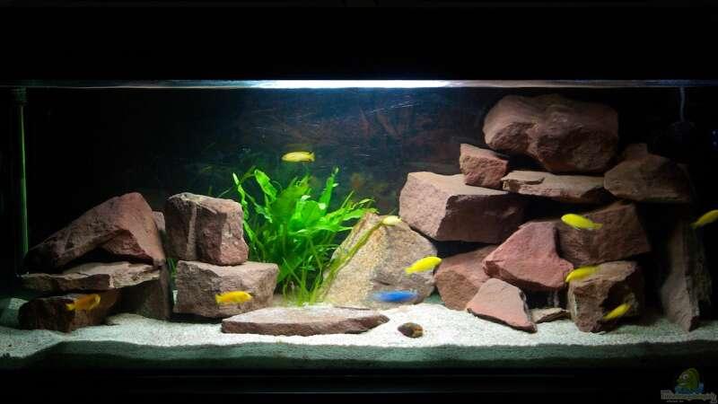 Aquarium von duder malawikus 22919 wohnzimmer - Aquarium wohnzimmer ...