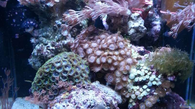 Aquarium Hauptansicht von My first Reef