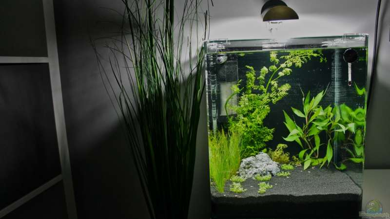 Aquarium Hauptansicht von Little Fire Forest