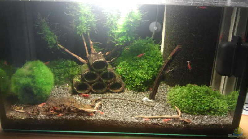 Aquarium Hauptansicht von Crystal Red Home