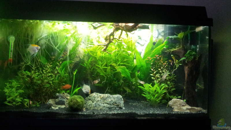 Aquarium Hauptansicht von The little forest